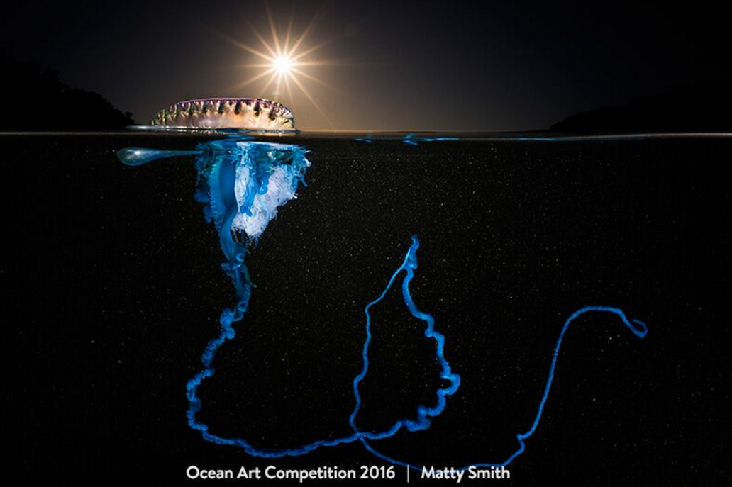"Matty Smith won the ""Best of Show"" prize at the 2016 Ocean Art Underwater Photo Competition."