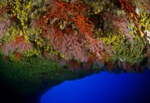 Scientists Discover Red Coral Garden In Underwater Cave (Photo credit: Enric Sala)