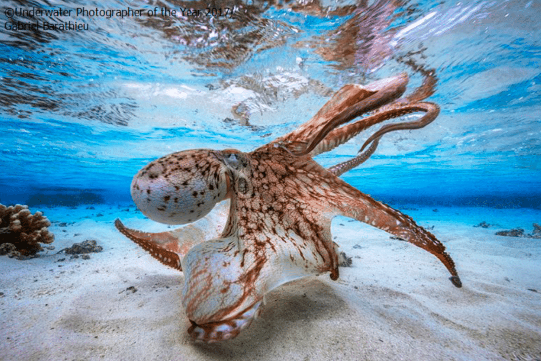 Underwater Photographer Of The Year Winners Announced (Photo credit: Gabriel Barathieu)