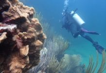 Local Divers Help Monitor Coral Reefs Off U.S. Virgin Islands (photo credit: NOAA)