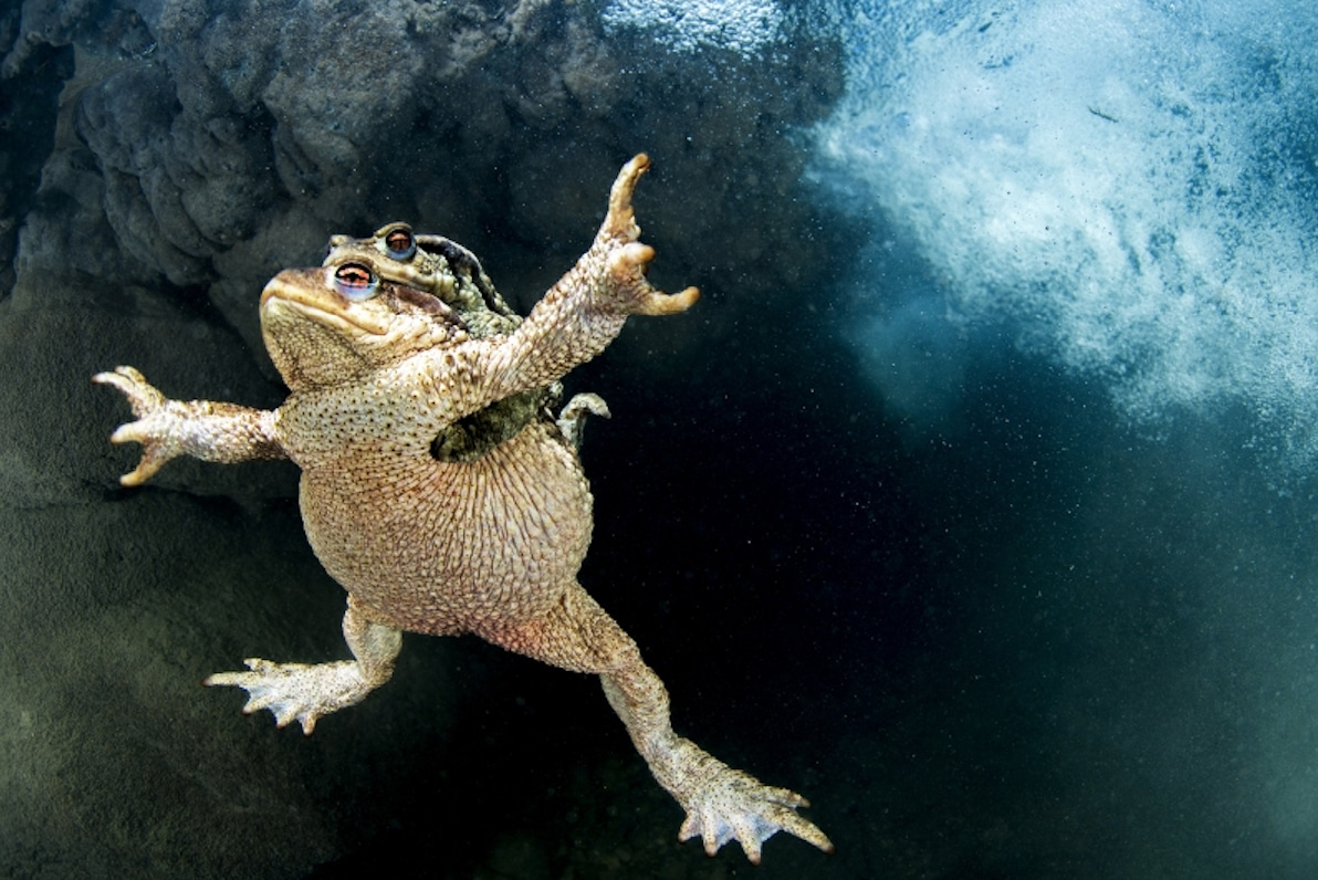 Submission Deadline For DEEP Indonesia Int'l Photo Contest Rapidly Approaching