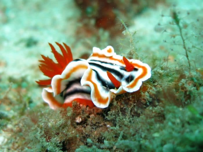 'Twin Rocks' is where you'll find beautifully coloured Nudibranchs.