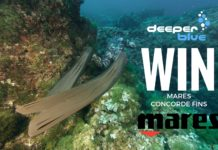 WIN a Pair of Mares Concorde Fins Competition