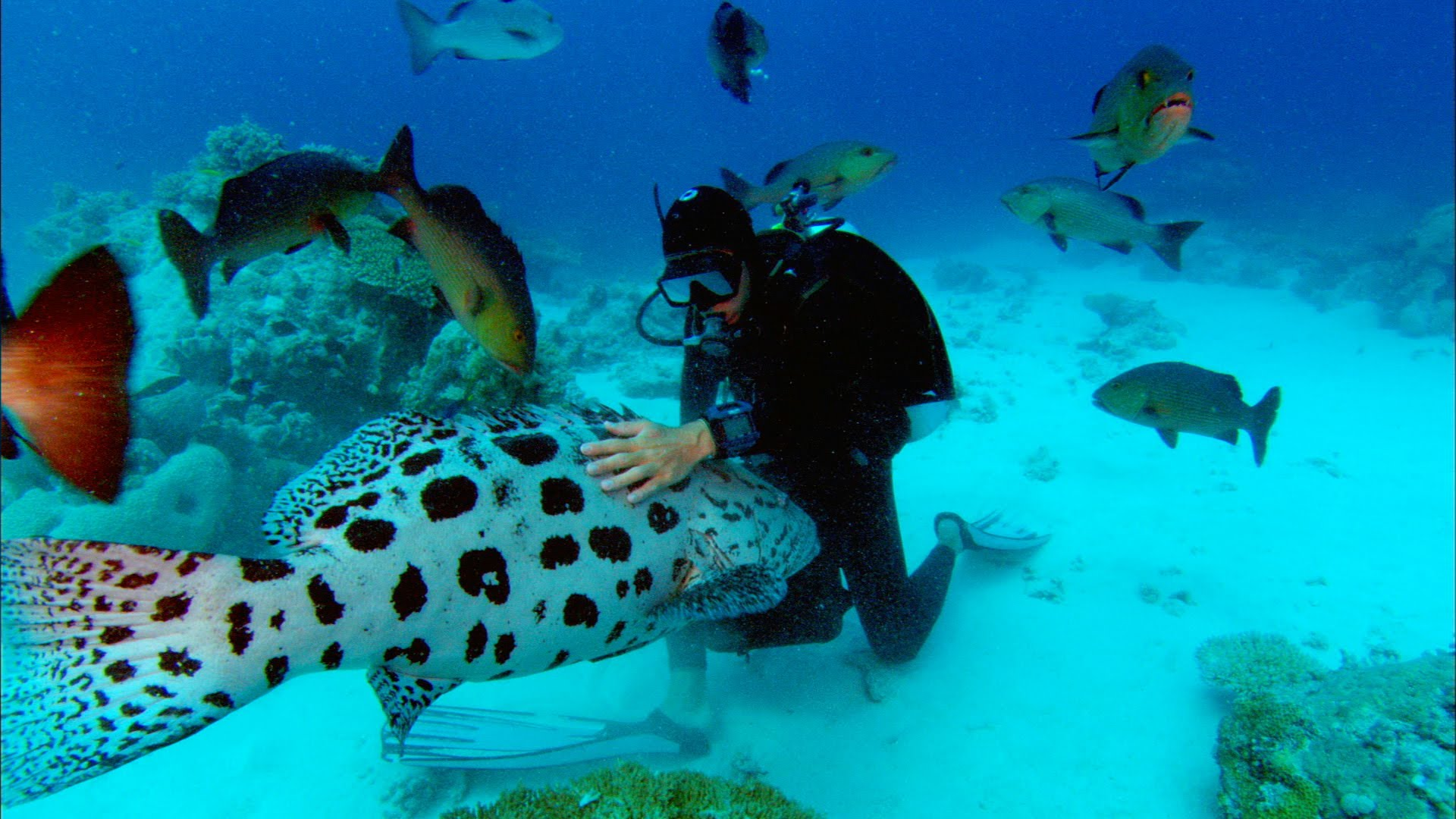 Body Of Sharkwater Director Rob Stewart Recovered