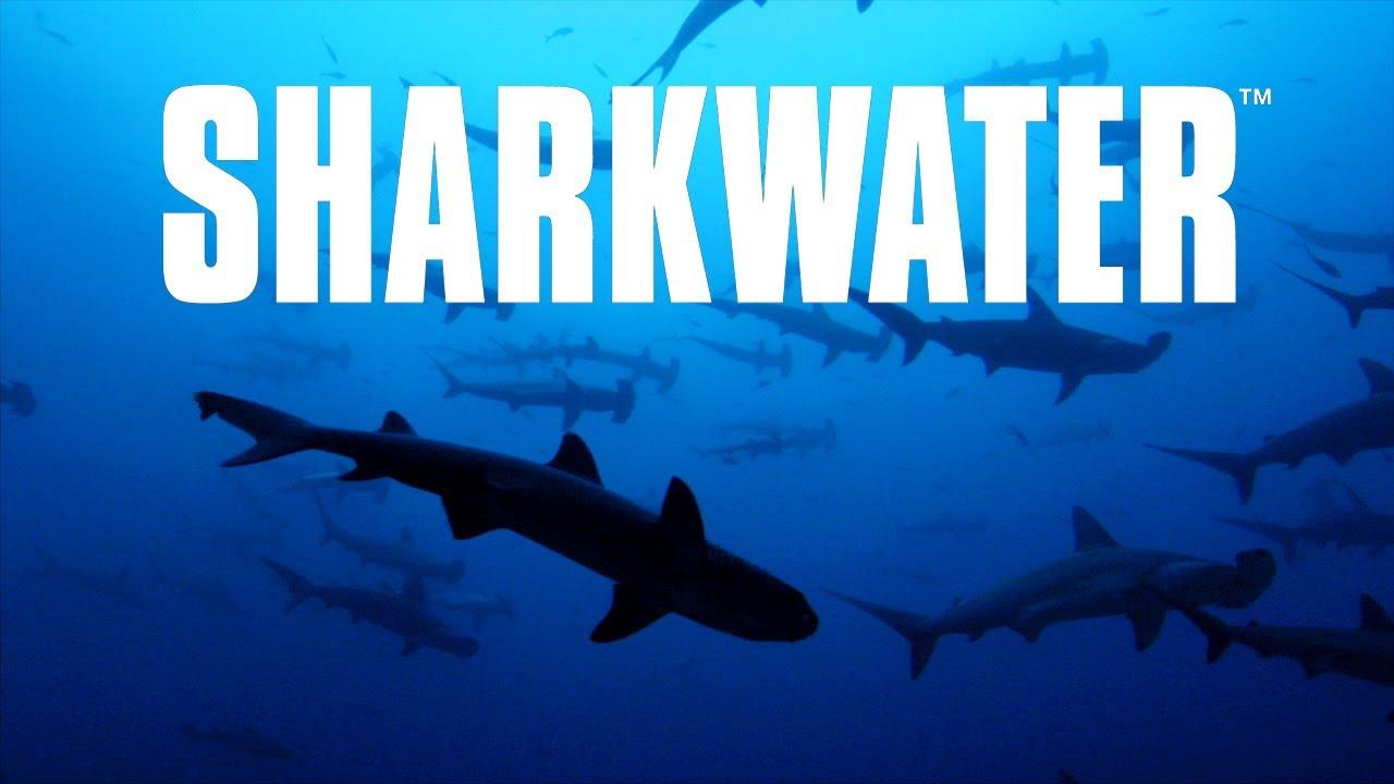 Rob Stewart's Sharkwater