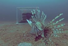 U.S. Scientists Developing New Lionfish Trap Designs (Photo Credit: Steve Gittings/NOAA)