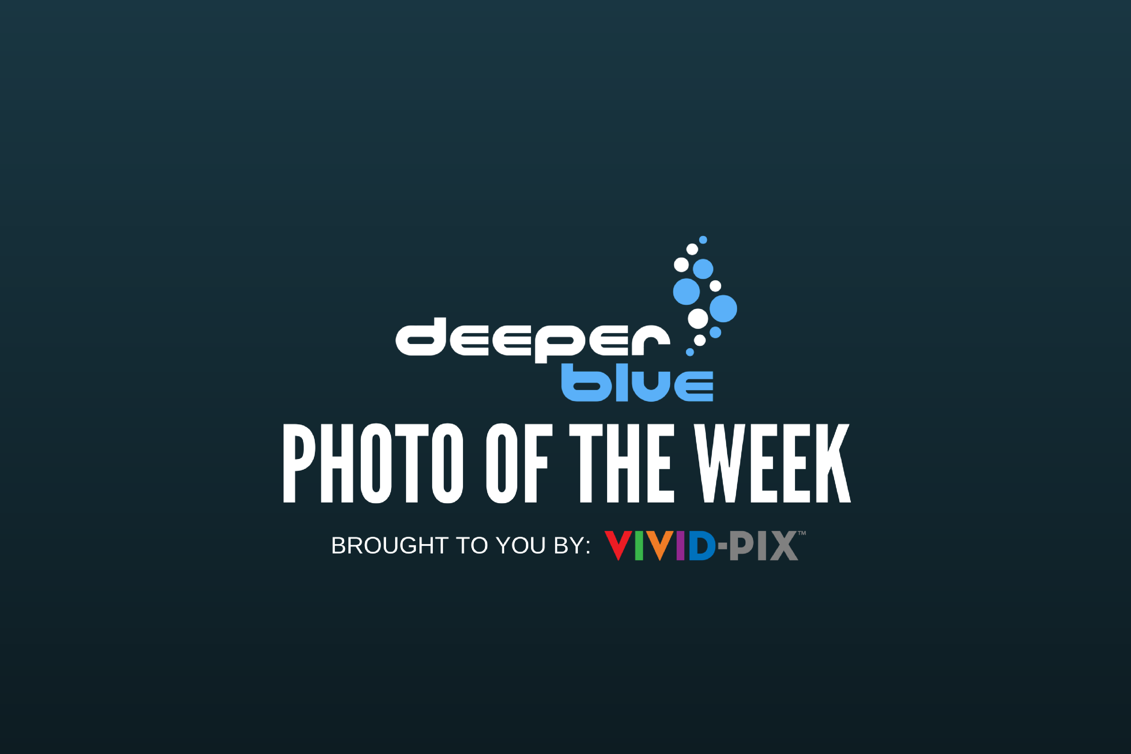 DeeperBlue.com - Photo of the Week - Brought to you by Vivid Pix