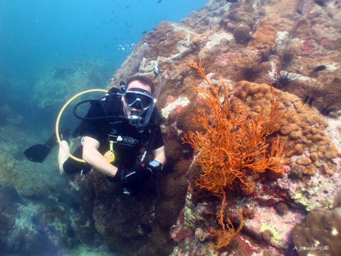 reef diving near pattaya