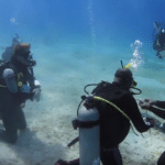 Stuart Cove's Dive Bahamas Offering Free Shark Specialty Instructor With IDC