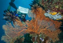 PADI Instructor Bobby Post Goes On A Dream Trip To The Great Barrier Reef