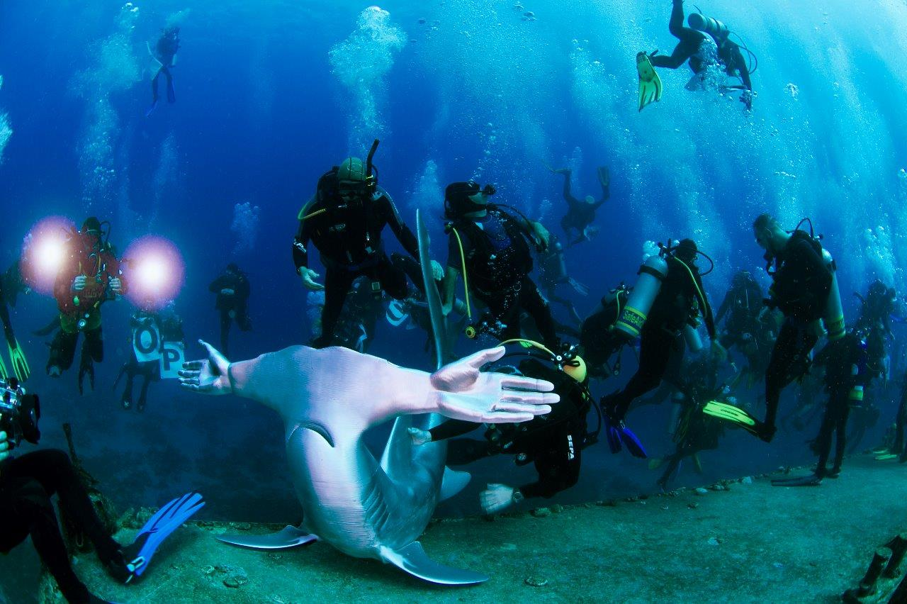 Huge Protest Dive Supporting Shark Conservation Planned For October 22nd (Photo Credit: Mike Fuller)