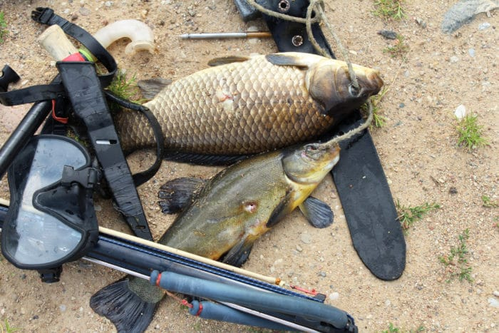 Equipment for spearfishing