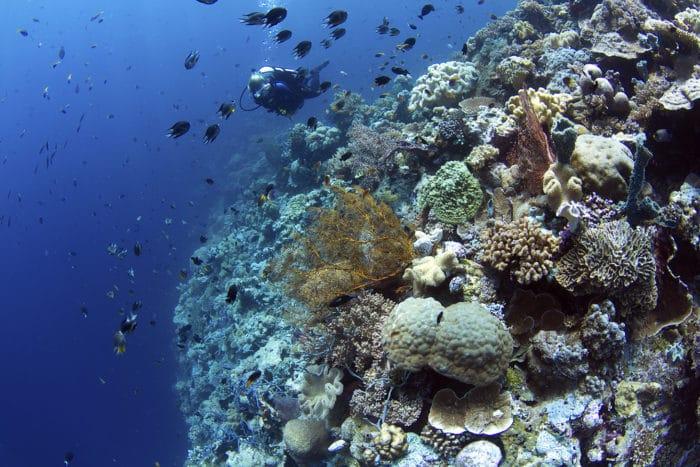 Wakatobi dive site Blade