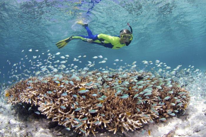Snorkeler on the Wakatobi House Reef