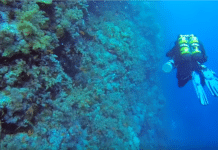 Technical Diver Decompressing on Southern Red Sea reef