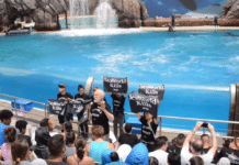 Actor James Cromwell Arrested At SeaWorld 'Orca Encounter' Protest