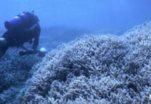 Multiple Screenings Of The 'Chasing Coral' Documentary Are Taking Place This Week