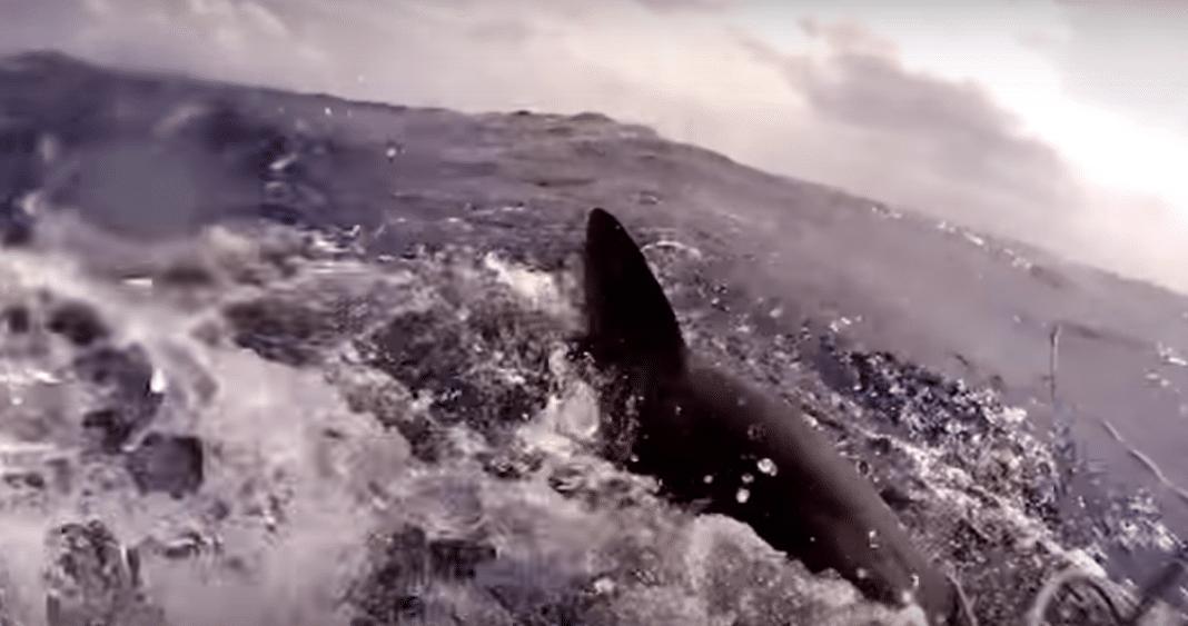 Spear Fisherman battles shark