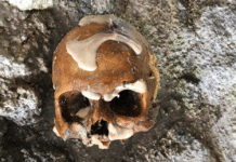 Florida Keys Divers Find Human Skull (Photo Credit: Monroe County Sheriff's department)
