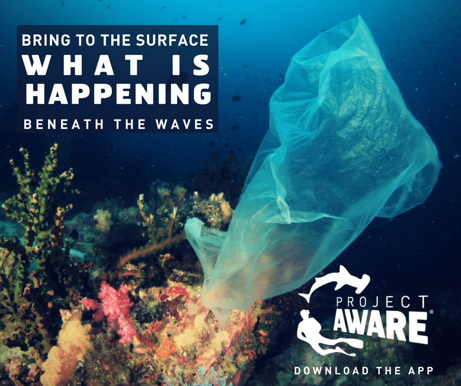 Dive Against Debris Mobile App Bring to the surface