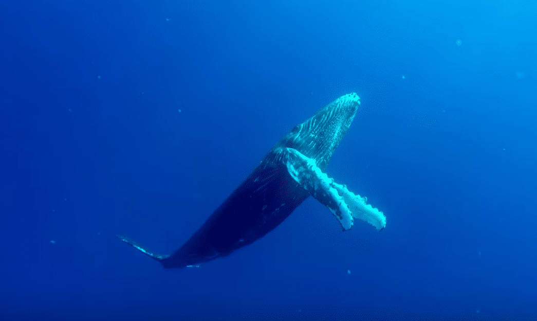 Image of a Whale