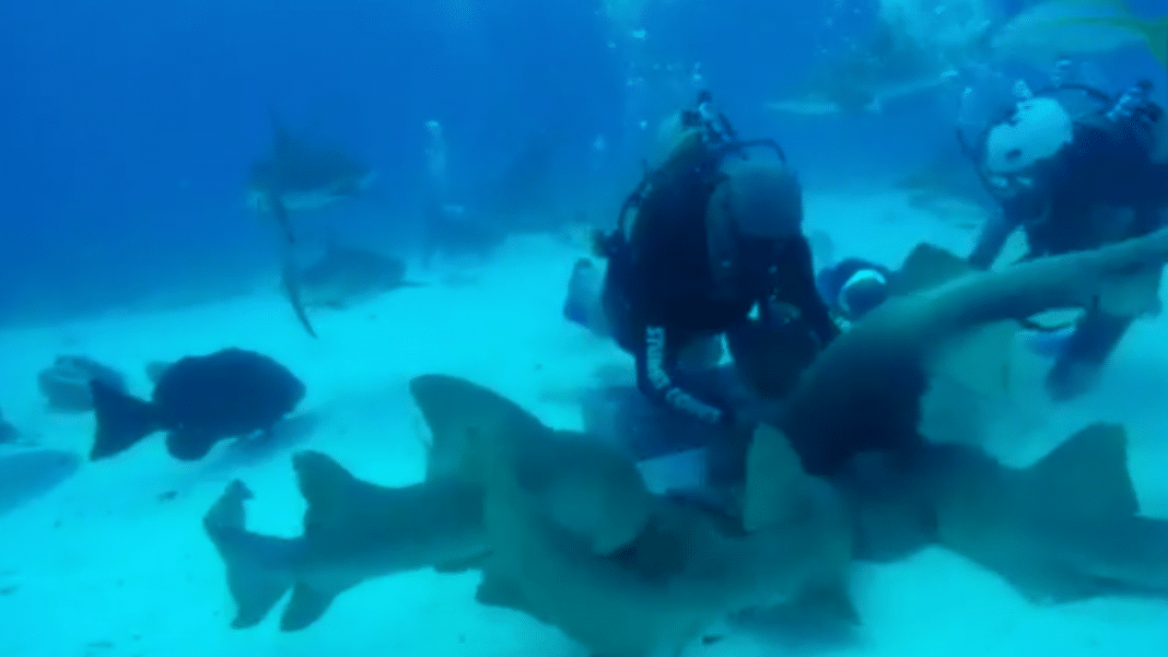Dive Guide Abuses Nurse Sharks in Disturbing Video