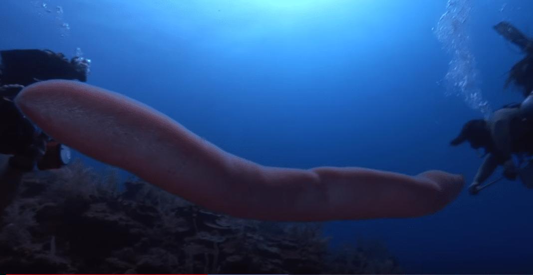 Unicorn of the sea spotted off Australia