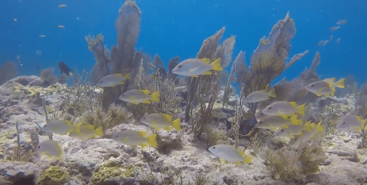 Key largo reefs suffer less than expected damage during Hurricane Irma