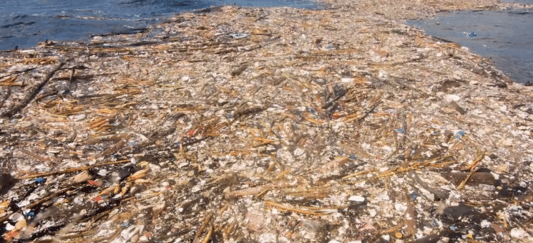 Huge island of plastic rubbish found floating off Roatan