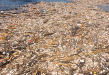 Huge island of plastic rubbish found floating off Roatan