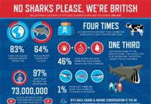 Shark Awareness Sorely Lacking In The UK, Or So It Would Seem