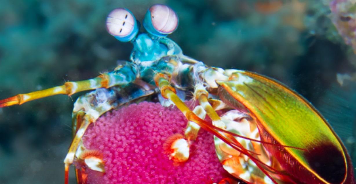 Biodiversity at Atlantis Philippines