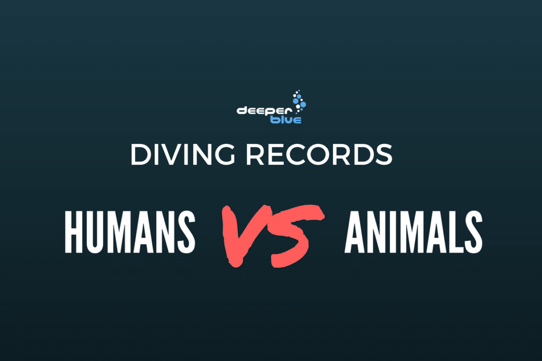 Diving Records - Humans vs Animals