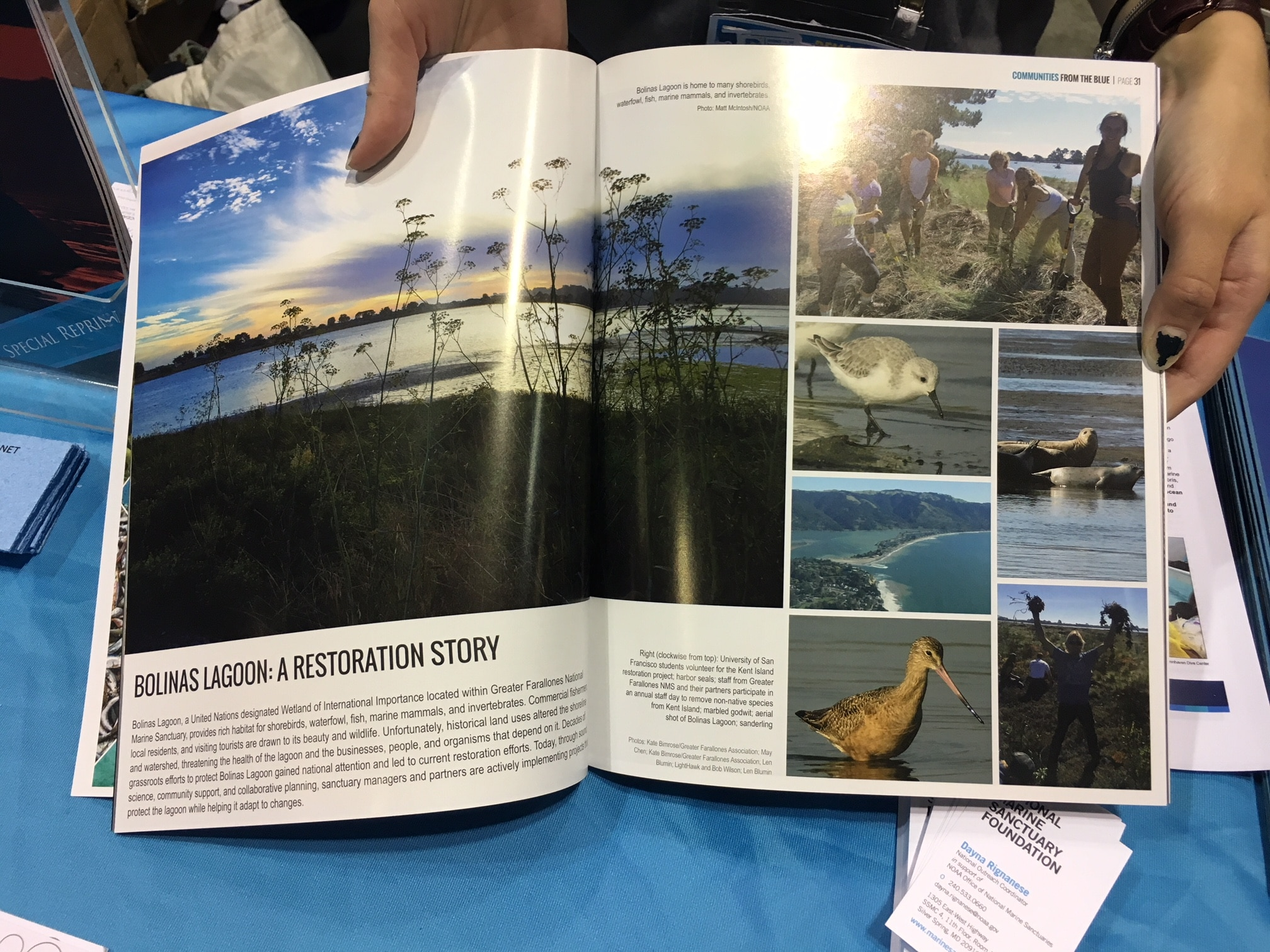 #standupforsanctuaries A story of restoration in the Greater Farallones NMS