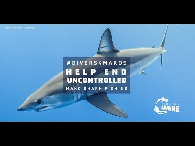 Project AWARE Campaigning For Shortfin Mako Shark Catch Limits
