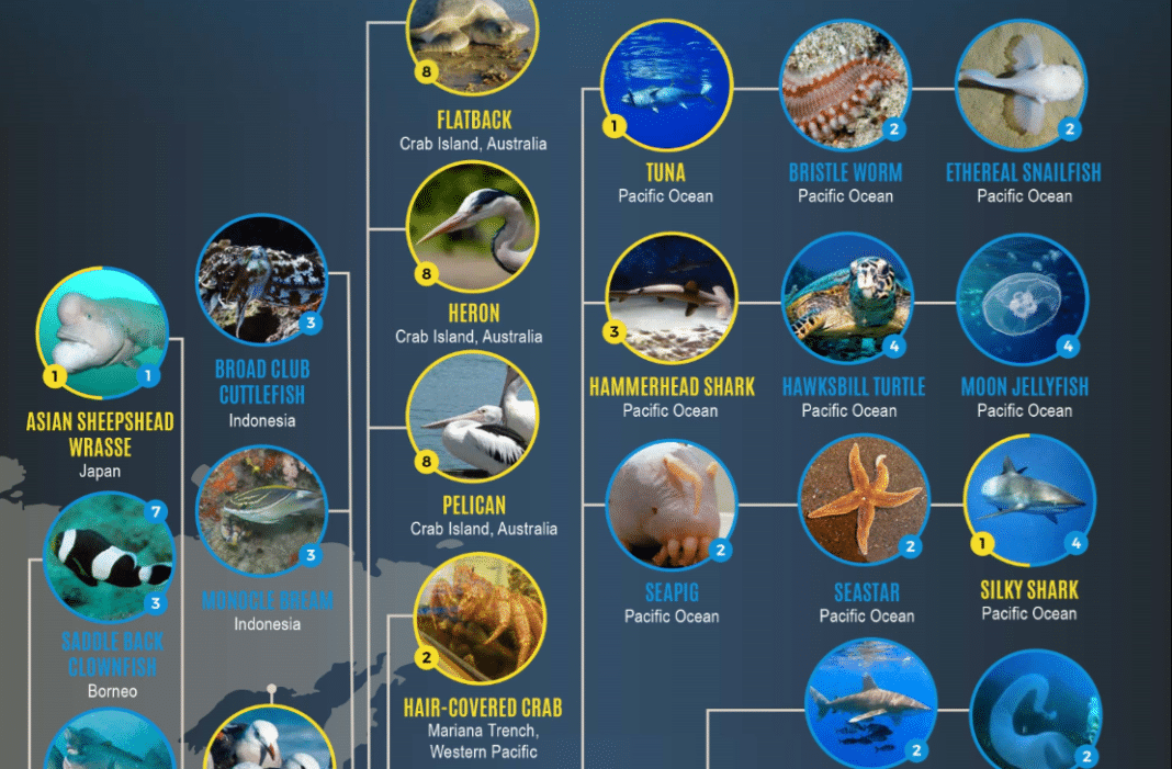 Blue Planet Infographic