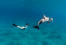 Freediver Algera Ally dives with dolphins while pregnant