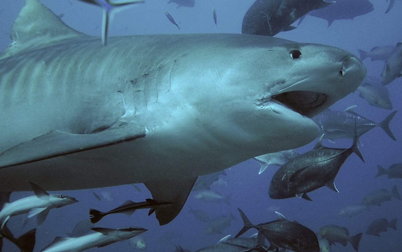 American women killed by shark while diving in Costa Rica