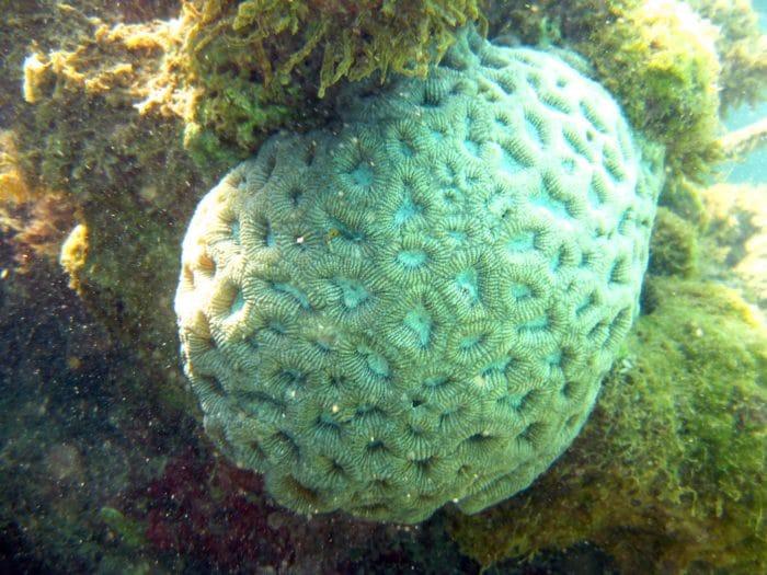 """Maragogi es el punto de """"salto"""" de la """"Costa de Coral""""."""