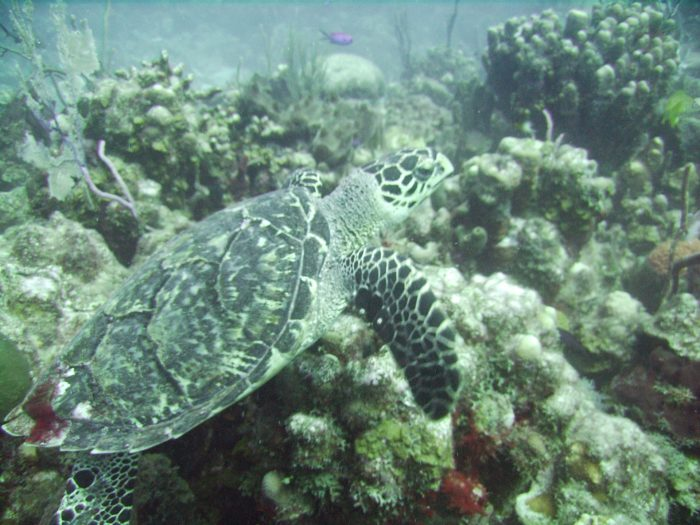 'One Thousand Steps' is a great dive site if you're hoping to see turtles.