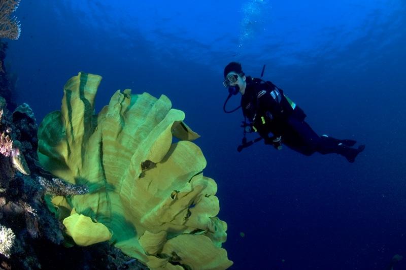 Diving Milne Baylink https://www.flickr.com/photos/bluebeyond/