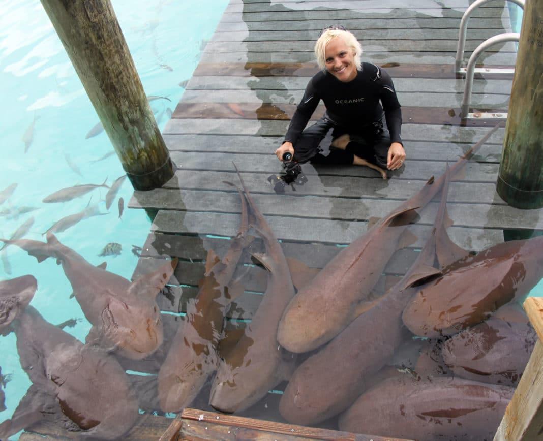 Shark Diaries: Yes, Nurse Sharks are Real Sharks 2