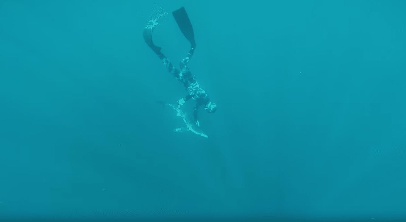 Riley Elliott freedives with a shark