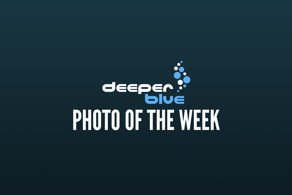 DeeperBlue.com - Photo of the Week