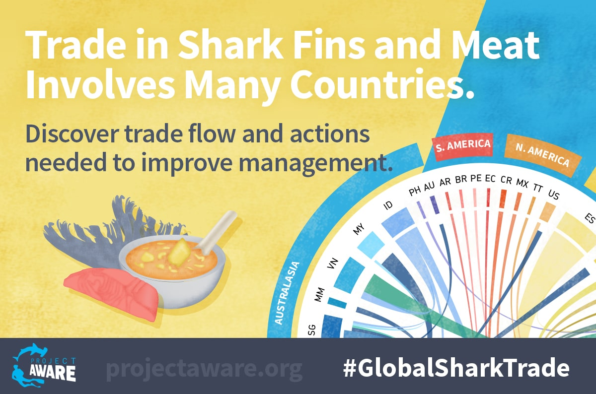 Project AWARE Infographic On The Global Shark Trade