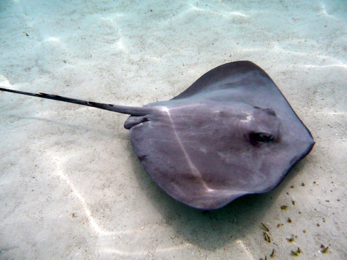 Keep an eye out for Rays around The Spring dive site.