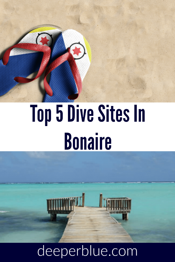 Top 5 Dive Sites In Bonaire