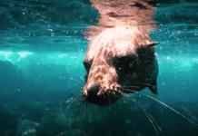 Galapagos Freediving