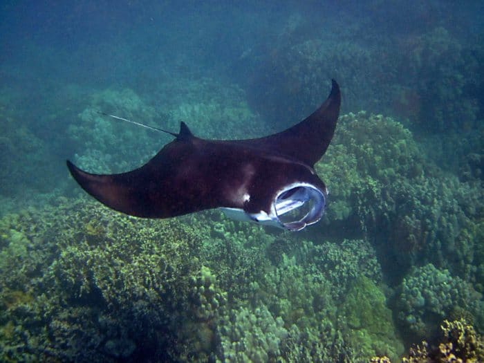 Anau is known for it's Manta Ray cleaning station.