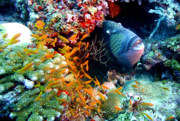 Look out for Triggerfish at Haapiti dive site
